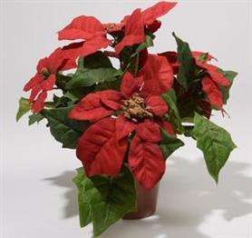 Silk Poinsettia in Pot Christmas Red 27cm £5.99 Click to visit Chessington Garden Centre